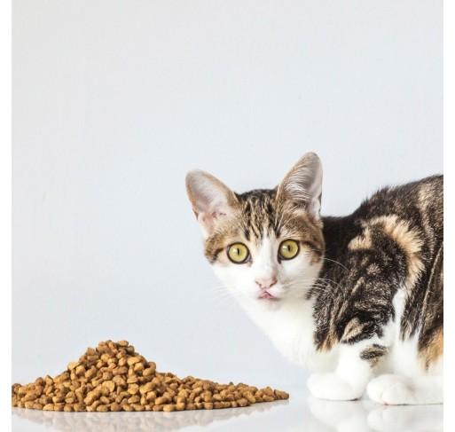VeggieAnimals PLUS - Gatti Adulti
