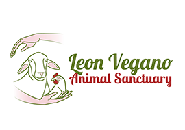 Leon vegano - Animal santuary