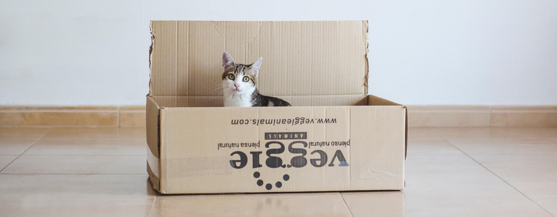 ¿Los gatos pueden ser veganos?