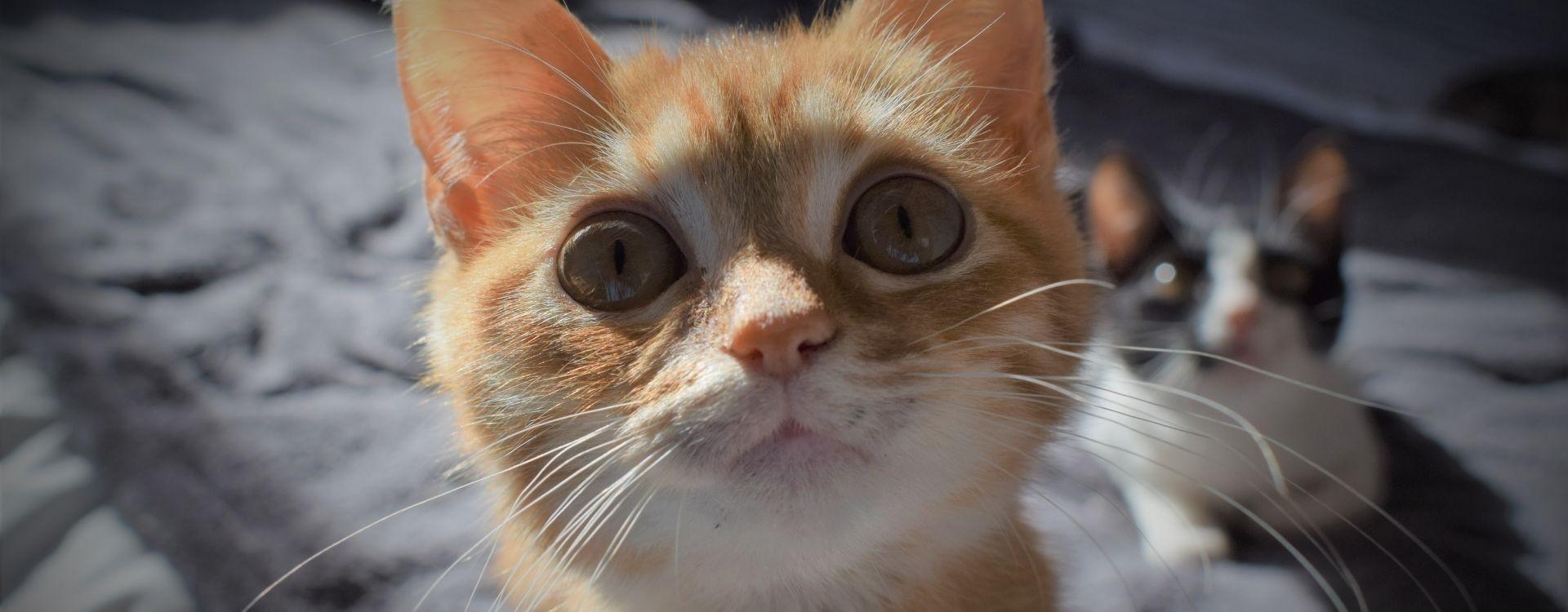 Perché il gatto fa le fusa?