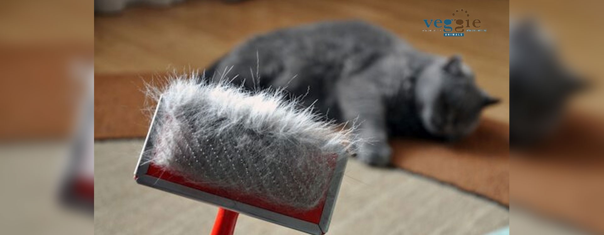 My cat is shedding