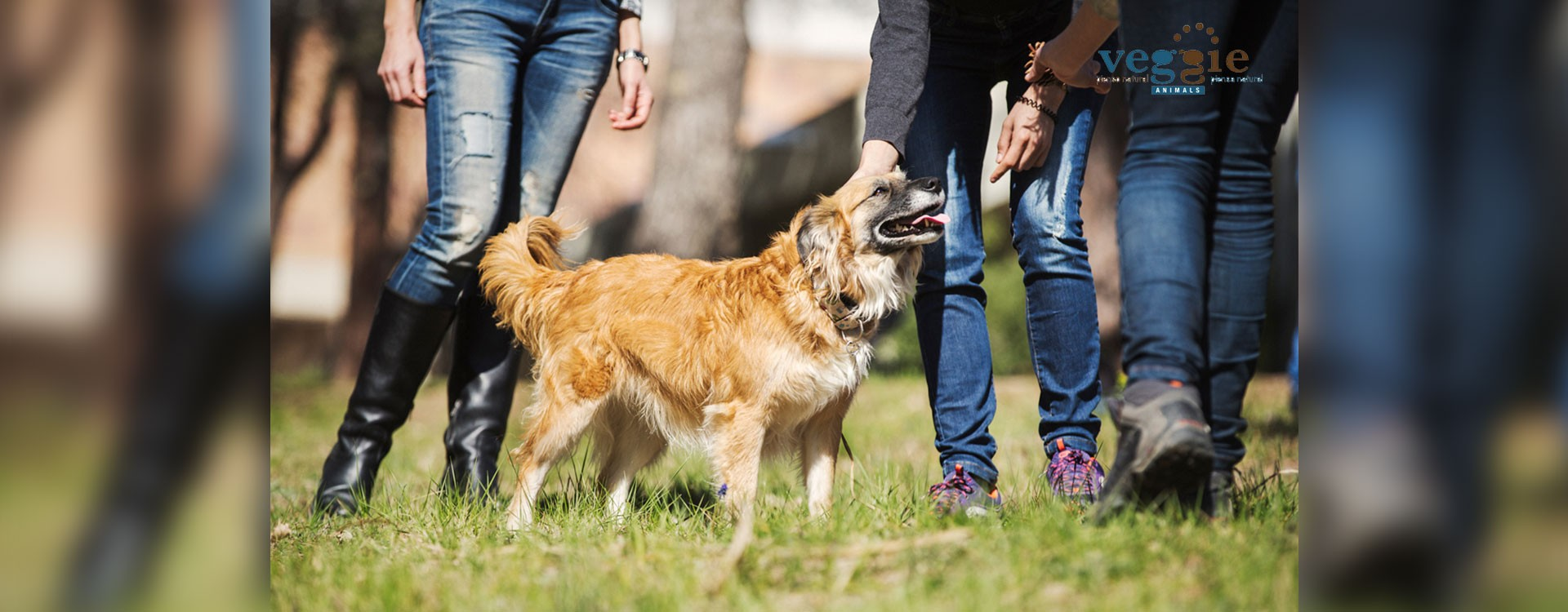 What time is the best to walk a dog?