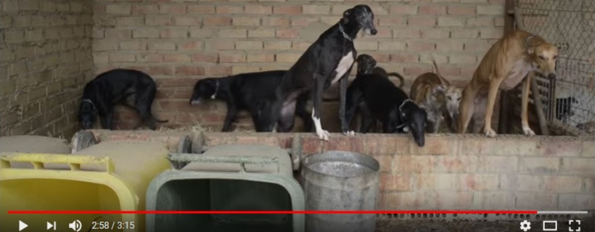 LOS 10 (+1) MEJORES DOCUMENTALES ANIMALISTAS