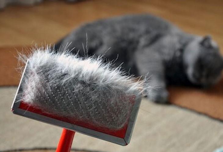 Il mio gatto perde il pelo