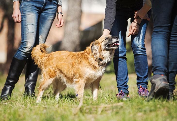 ¿A qué horas pasear a un perro?