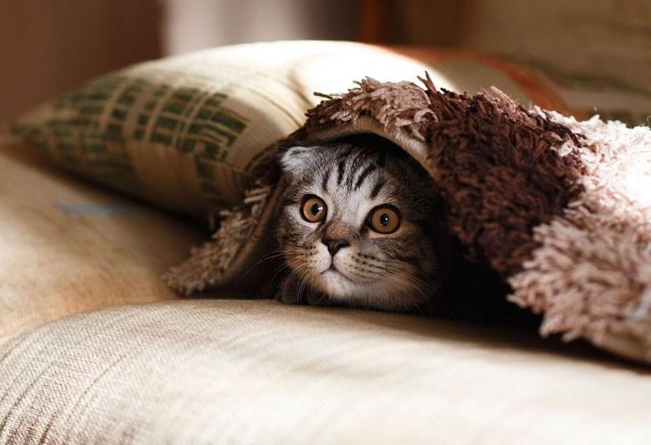 ¿A qué temperatura tiene frío un gato?