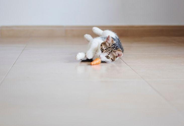 Me da pena dejar a mi gato solo en casa