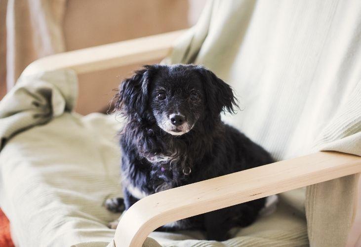 ¿Por qué mi perro se lame o muerde las patas o la cola?