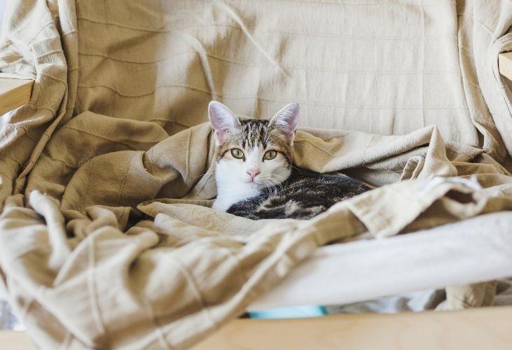 ¿Es bueno que mi gato duerma conmigo?